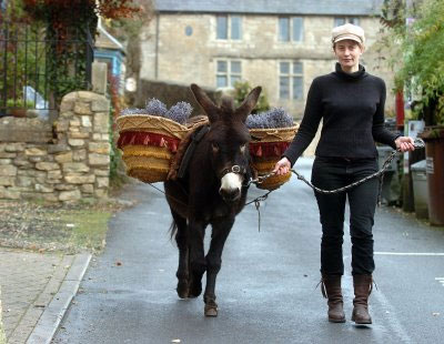 Teddy, the delivery donkey