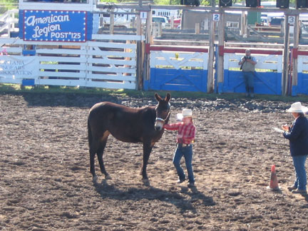 Fri-YouthShowmanship04.jpg